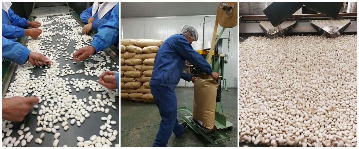 芸豆加工过程
