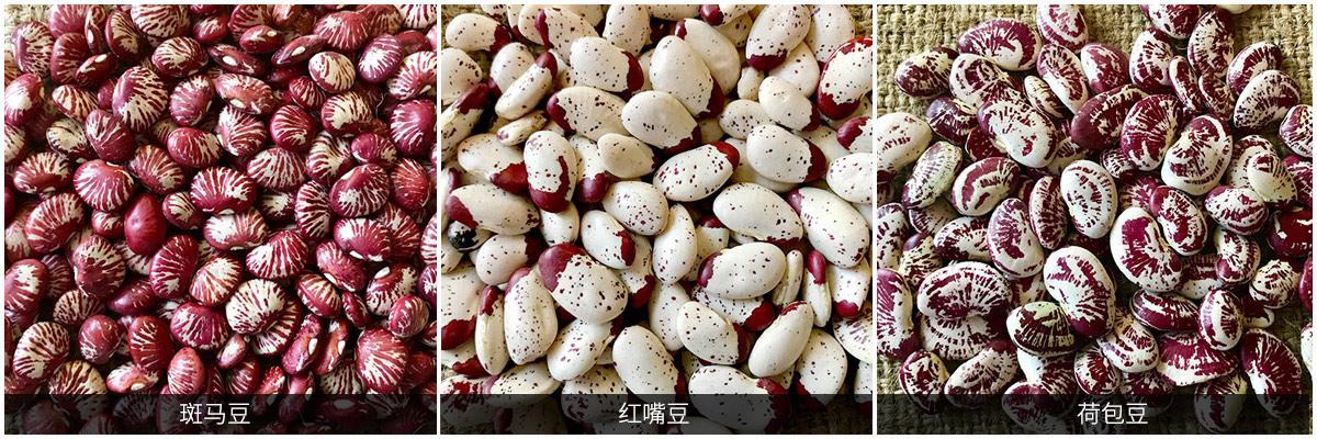 芸豆产品鉴赏